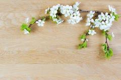 just rained Λουλούδια της Apple στο ξύλινο υπόβαθρο Επίπεδος βάλτε, τοπ άποψη Στοκ Φωτογραφία