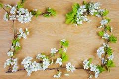 just rained Λουλούδια της Apple στο ξύλινο υπόβαθρο Επίπεδος βάλτε, τοπ άποψη Στοκ Φωτογραφίες
