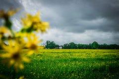 just rained Royaltyfria Bilder