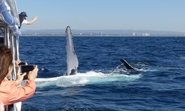 Just sayin` G`DAY, Whale Wave royalty free stock photography