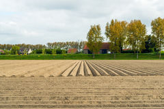 Just seeded potatoes in a field next to an embankment in a Dutch Stock Images