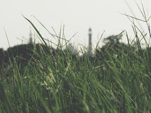 Just show it. Jama maszid is hidden from view by stupid grass Stock Photos