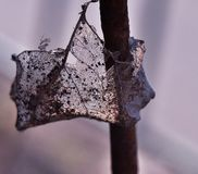 Macro photo of a dry leaf hanging on a metal pin stock photography