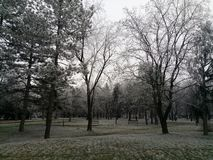 Early winter trees in park stock image