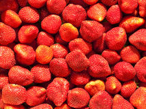 Just Strawberries Stock Photography