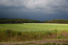 Just before the summer storm Royalty Free Stock Photography