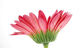 Just for you. Close-up daisy stock photos