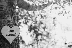 Juste arbre marié Photographie stock libre de droits