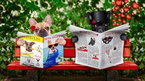 Juste chiens mariés sur le banc Photographie stock libre de droits