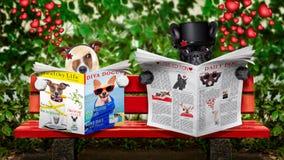 Juste chiens mariés sur un banc Image stock