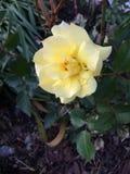 Juste fleuri images libres de droits
