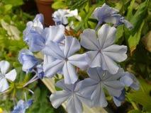Juste fleurs Image libre de droits