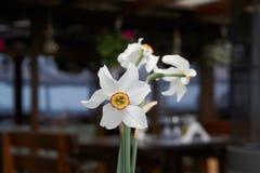 Juste fleurs photo stock