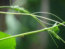 Juste fourmis Photo libre de droits