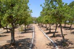 Juste parmi les nations faites du jardinage à l'holocauste Shoa Yad Vashem commémoratif à Jérusalem, Israël photographie stock libre de droits