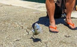 Juste poissons pêchés image stock