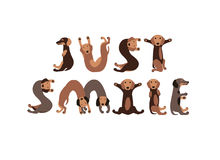 Juste sourire Le teckel poursuit des lettres illustration libre de droits