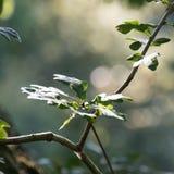 Juste une branche dans une forêt image libre de droits