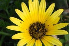 Juste une petite fleur photographie stock