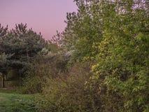 Juste vert en parc images libres de droits