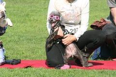 Justin czerwionki Haute Psi konkurs Zdjęcie Royalty Free