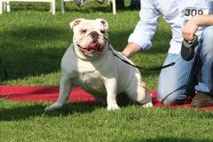 Justin Rudd Haute Dog Contest Stock Fotografie