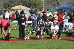 Justin Rudd Haute Dog Contest Immagini Stock Libere da Diritti