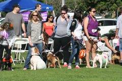 Justin Rudd Haute Dog Contest fotografia stock libera da diritti