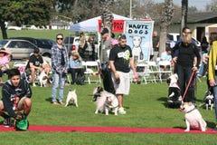 Justin Rudd Haute Dog Contest Stock Photo