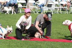 Justin Rudd Haute Dog Contest Royalty Free Stock Photo