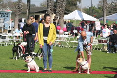 Justin Rudd Haute Dog Contest Royalty Free Stock Image