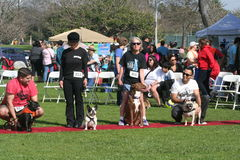 Justin Rudd Haute Dog Contest Royalty Free Stock Images