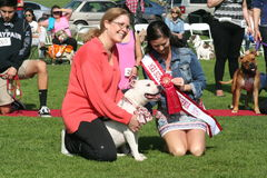 Justin Rudd Haute Dog Contest. Local dog loving community charitable event with twenty contest for dogs, ranging from best legs to best smile.  Held February 7th Stock Photo