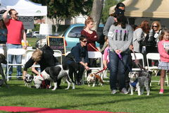 Justin Rudd Haute Dog Contest Royalty Free Stock Photos