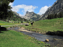 Justistal. Meadows in the valley of Justistal in Bernese Oberland royalty free stock photo