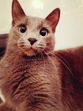 Juta the cat with that face stock photography