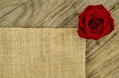 Jute, burlap texture with rose flower Stock Image