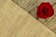 Jute, burlap texture with rose flower Royalty Free Stock Image