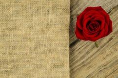 Jute, burlap texture with rose flower Stock Photos