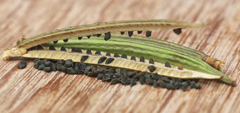Jute seeds Stock Photos