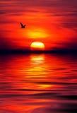 jutrzenkowa czerwień Zdjęcie Royalty Free