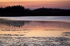 jutrzenkowy jeziorny ryś Fotografia Stock