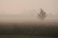 jutrzenkowy krajobrazowy prosty Veneto Fotografia Royalty Free