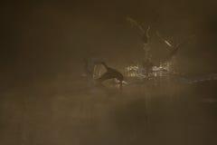 jutrzenkowy mglisty Obraz Stock