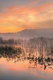 jutrzenkowy wschodni jezioro Zdjęcia Royalty Free