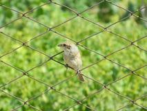 Juvenile bird Stock Image