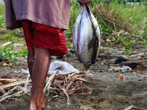 Juvenile Yellowfin tuna Thunnus albacares freshly landed by the artisanal fishermen in Mindoro, Philippines Stock Photography