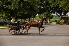 Juventudes de Amish no carro de 2 rodas imagens de stock royalty free