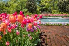 Juwel tonte Tulpen in der Orangen-, Purpurroter und rosalinie ein Gehweg des roten Backsteins auf einem sonnigen Morgen im Frühja lizenzfreie stockfotos