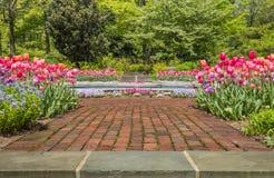 Juwel tonte Tulpen in der Orangen-, Purpurroter und rosalinie ein Gehweg des roten Backsteins auf einem sonnigen Morgen im Fr?hja stockfotos